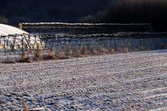 покрытый Снег ландшафт стоковая фотография rf