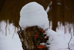 покрытый Снег пень стоковые фотографии rf