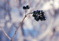 Покрытый снег разветвляет как абстрактный ландшафт предпосылки или зимы Стоковая Фотография RF