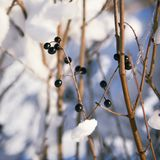 Покрытый снег разветвляет как абстрактный ландшафт предпосылки или зимы Стоковое фото RF