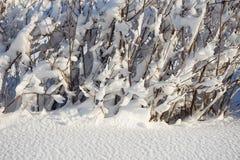 Покрытый снег разветвляет как абстрактный ландшафт предпосылки или зимы Стоковое Изображение