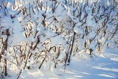 Покрытый снег разветвляет как абстрактный ландшафт предпосылки или зимы Стоковые Фото