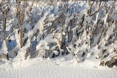 Покрытый снег разветвляет как абстрактный ландшафт предпосылки или зимы Стоковые Фотографии RF