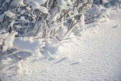 Покрытый снег разветвляет как абстрактный ландшафт предпосылки или зимы Стоковое Фото