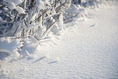 Покрытый снег разветвляет как абстрактный ландшафт предпосылки или зимы Стоковые Изображения RF