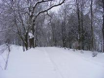 покрытый Снег след старого покрытого снег парка Стоковые Изображения
