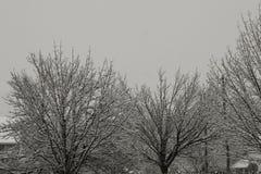 Покрытый снег Стоковое Фото