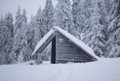 Покрытый снег Стоковые Фото
