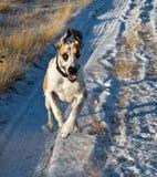 покрытый снежок большого путя датчанина идущий Стоковые Изображения