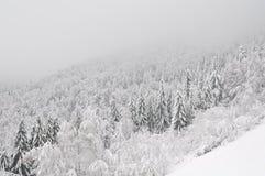 покрытый снежок горы Стоковое Фото