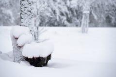 покрытый снежок парка стоковое изображение rf