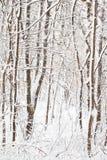 покрытый снежок пущи Стоковые Изображения