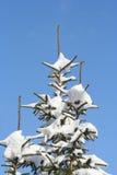 покрытый снежок сосенок стоковое фото rf