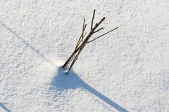 покрытый снежок тени halm поля Стоковая Фотография RF