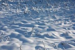 покрытый снежок лужка стоковые фотографии rf