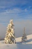 2 покрытых снег дерева Стоковые Изображения RF