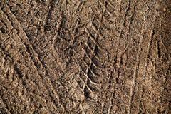 покрышка следа Стоковая Фотография RF