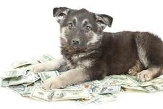 Покупать щенку? Стоковые Фотографии RF