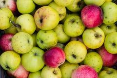 покупка grocer красная s зеленого цвета предпосылки яблок стоковые изображения