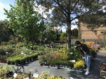 Покупки женщины для новых заводов и цветков на садовничать и поставщике заводов на открытом воздухе стоковое фото