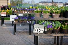 Покупки улучшения дома: Цветки Стоковые Фото