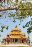 Поклонение с предпосылкой дерева и неба стоковое фото