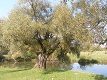 Полдень лета на реке старые валы стоковые фото