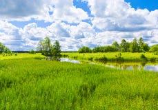 Полдень лета Стоковые Фото