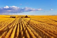 полдень Монтана осени солнечная стоковые фотографии rf