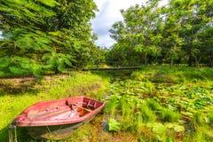 Полдень с прудом в шлюпке леса a около пруда стоковые фотографии rf