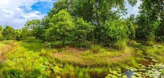 Полдень с прудом в шлюпке леса a около пруда стоковая фотография rf