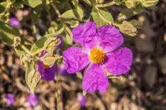 Полевой цветок весной outdoors Стоковая Фотография