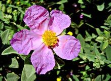 Полевой цветок под солнечным светом Стоковые Изображения RF