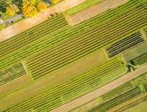 Полевые культуры от взгляда глаза ` s птицы Сельский ландшафт в осени, увиденной от воздуха Стоковые Фотографии RF