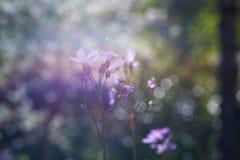 Полевые цветки весны в крупном плане стоковая фотография rf