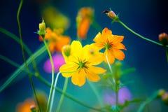 Полевые цветки в Yangshuo Китае стоковая фотография