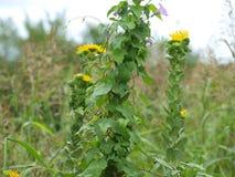 Полевые цветки идут одичалыми и более одичалыми стоковое фото rf