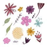 Полевые цветки набор руки вектора вычерченные, элементы оформления иллюстрация вектора