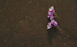 Полевые цветки на простой надгробной плите стоковое фото rf