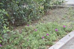 Полевые цветки обочины Стоковое фото RF