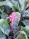 Полевые цветки Флориды стоковая фотография