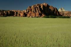 полей пшеница навсегда Стоковые Фото