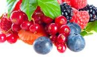 поленика голубики ежевики ягод свежая Стоковое Фото