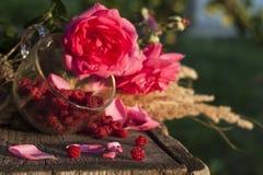 Поленика и натюрморт роз стоковые фотографии rf
