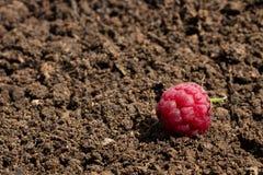 Поленика помещена на почве Стоковые Фото