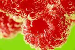 Поленики на зеленом цвете Стоковое Фото