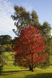 полесье валов цвета осени стоковое фото