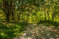 Полесье весны Ландшафт Лес Glenashdale, Arran, Шотландия Стоковое фото RF