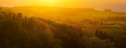 Полесье в солнечном свете осени стоковые фотографии rf