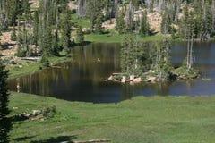 полесье озера Стоковое Изображение
